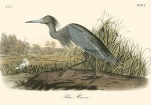 Blue Heron by John James Audubon