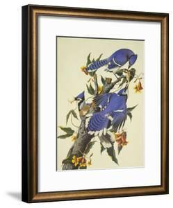 Blue Jay by John James Audubon