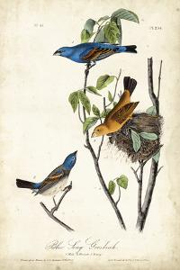 Blue Song Grosbeak by John James Audubon