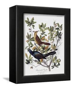 Boat Tailed Grackle, Male and Female by John James Audubon