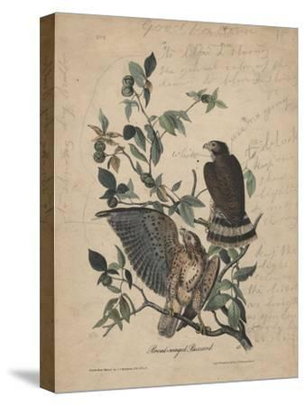 Broad-Winged Buzzard, 1840