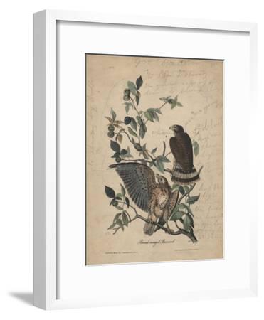 Broad-Winged Buzzard, 1840