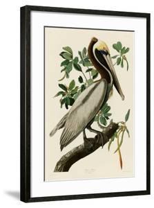 Brown Pelican II by John James Audubon