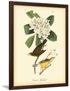 Canada Flycatcher by John James Audubon