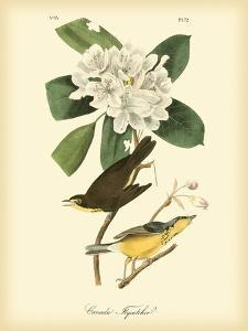 Canada Flycatcher by John James Audubon