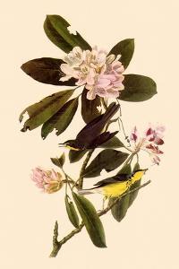 Canada Warblers by John James Audubon
