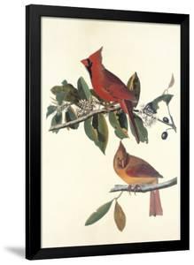 Cardinal Grosbeak by John James Audubon