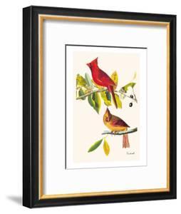 Cardinal by John James Audubon