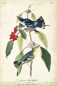 Cerulean Wood Warbler by John James Audubon