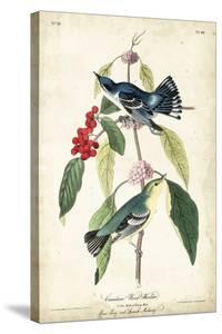 Cerulean Wood Warbler by John James Audubon