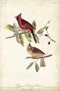 Common Cardinal Grosbeak by John James Audubon