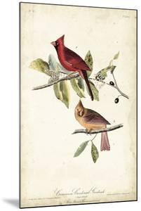 Common Cardinal Grosbeak by John James Audubon