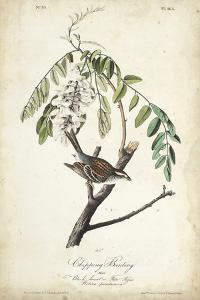Delicate Bird and Botanical I by John James Audubon