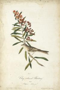Delicate Bird and Botanical II by John James Audubon