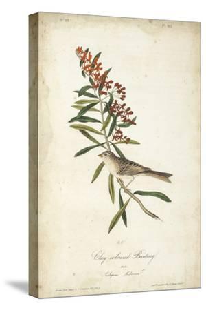 Delicate Bird and Botanical II
