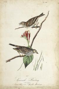 Delicate Bird and Botanical III by John James Audubon