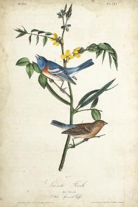 Delicate Bird and Botanical IV by John James Audubon