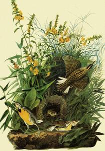 Eastern Meadowlarks by John James Audubon
