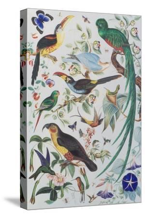 Exotic Parrots, c.1850