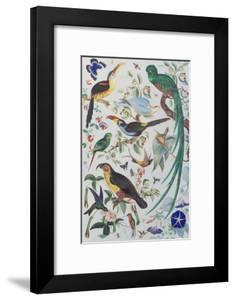 Exotic Parrots, c.1850 by John James Audubon