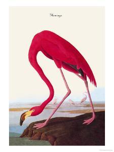 Flamingo by John James Audubon