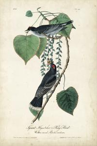 Flycatcher & King Bird by John James Audubon