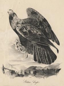 Golden Eagle, Litho by J.T. Bowen, from 'Birds of America', 1840 by John James Audubon
