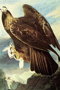 Golden Eagle by John James Audubon