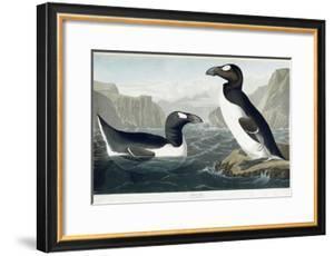 Great Auk, 1836 by John James Audubon
