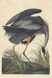 Great blue Heron, 1834 by John James Audubon