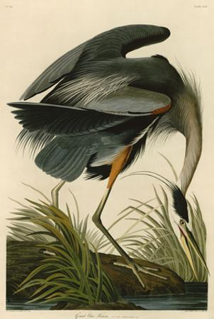 Great Blue Heron by John James Audubon