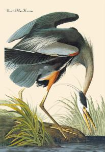 Great Blue Heron by John James Audubon