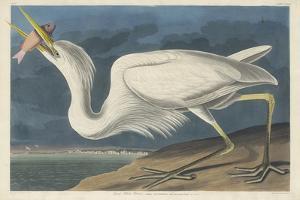 Great White Heron, 1835 by John James Audubon