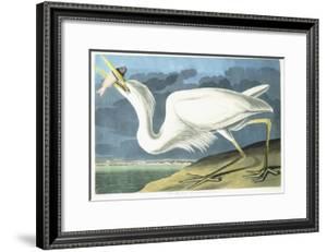 Great White Heron, Male Adult, Spring Plumage, 1835 by John James Audubon
