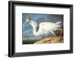 Great White Heron by John James Audubon