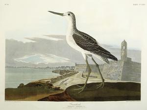 Greenshank, View of the St, 1835 by John James Audubon