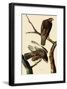 Harlan's Hawks by John James Audubon