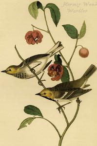 Hermit Wood Warbler by John James Audubon