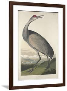 Hooping Crane, 1835 by John James Audubon