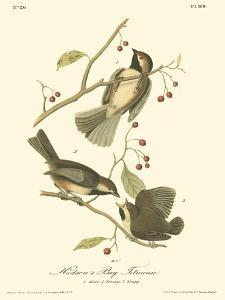 Hudson's Bay Titmouse by John James Audubon