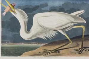 Illustration from 'Birds of America', 1827-38 (Hand-Coloured and Aquatint) by John James Audubon