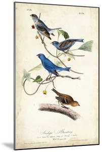 Indigo Bunting by John James Audubon