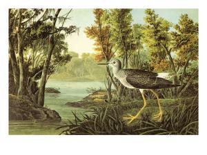 Lesser Yellow Legs by John James Audubon