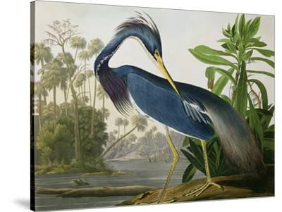 "Louisiana Heron from ""Birds of America"" by John James Audubon"