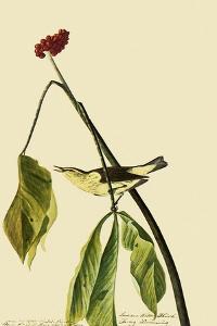 Louisiana Waterthrush by John James Audubon