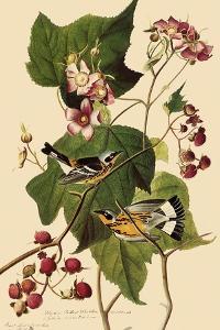 Magnolia Warblers by John James Audubon