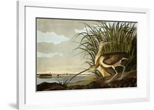 Male And Female Long Billed Curlew (Numenius Americanus) with the City of Charleston Behind by John James Audubon