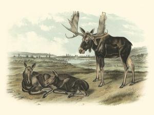 Moose Deer by John James Audubon