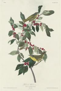 Nashville Warbler, 1830 by John James Audubon
