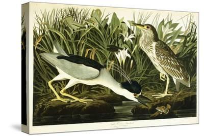 Night Heron or Lua Bird, 1835